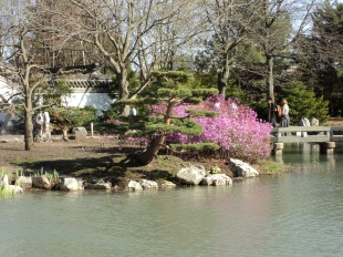 Pond at Chinese Garden