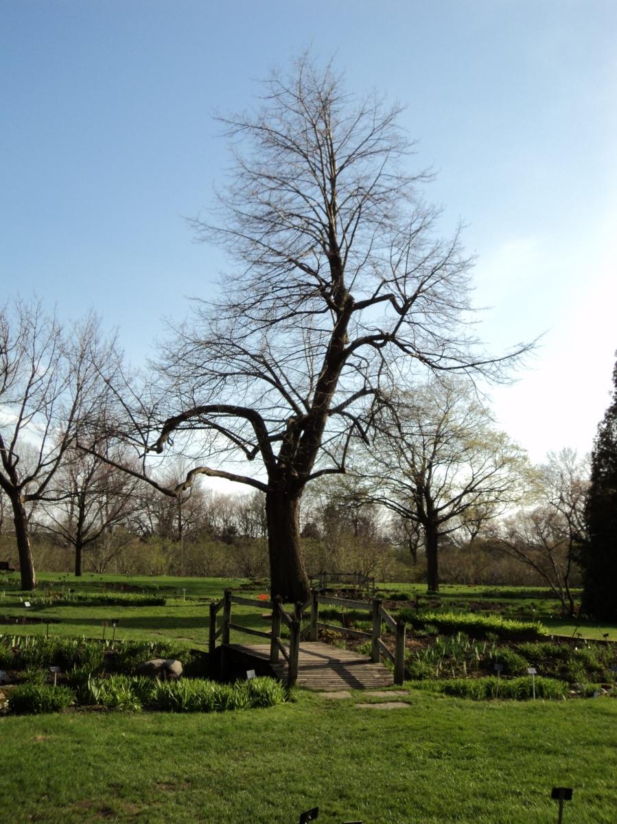 Tree at Montreal Botanical Garden